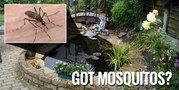 Live Tension Free With Pest Control Philadelphia!!